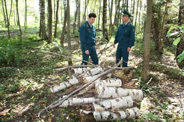 Как арендовать делянку леса для вырубки могла