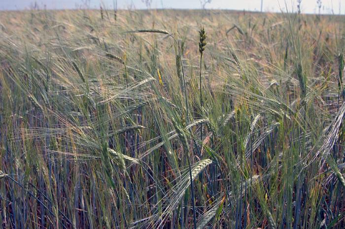 Кировским аграриям компенсируют вред в итоге чрезвычайной ситуации
