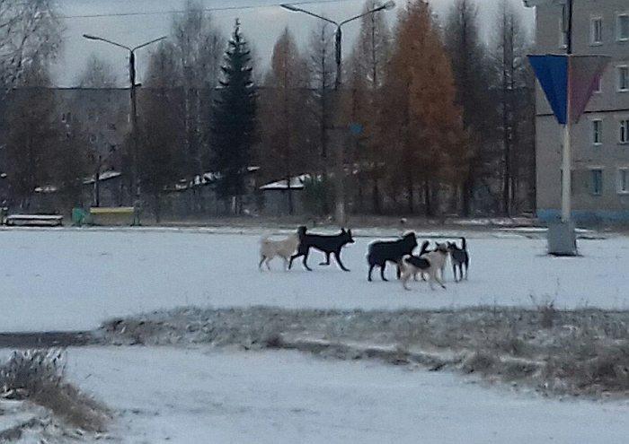 ВОмутнинском районе бездомная собачка напала навоспитанника детского сада