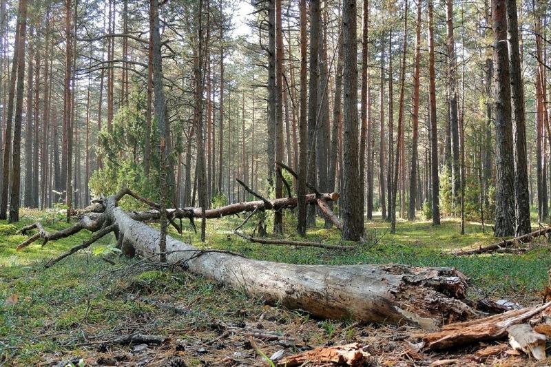 можно ли в лесу посадить дерево
