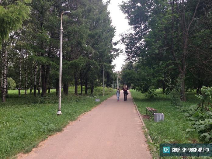 ИзКочуровского парка «ушли» две синие ели