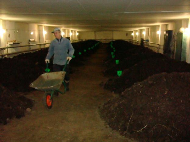 Бизнес на дождевых червях. Хозяйка фирмы по производству органических удобрений - об экологии, карме и регистрации товарных знаков