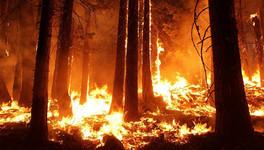 С начала года в Кировской области произошло 10 лесных пожаров