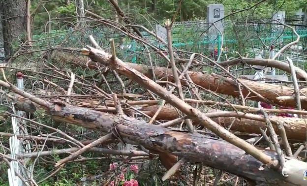 «Одинокая старушка плакала возле поломанного памятника»: в Демьяново во время грозы кладбище завалило деревьями