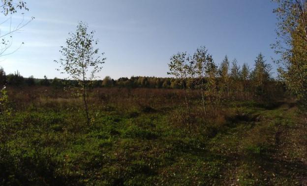 В лесах Кировской области разыскивают четырех грибников