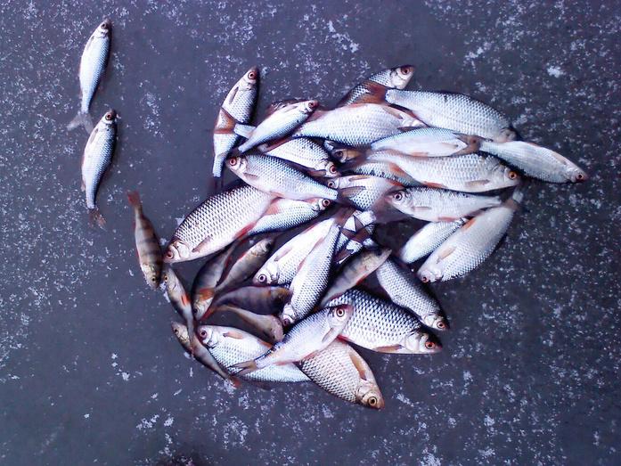Зимняя рыбалка в кировской области