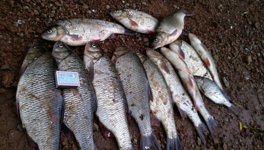 горох на рыбалку без замачивания