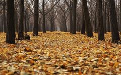 Погода в Кирове. В пятницу ожидается +3 градуса